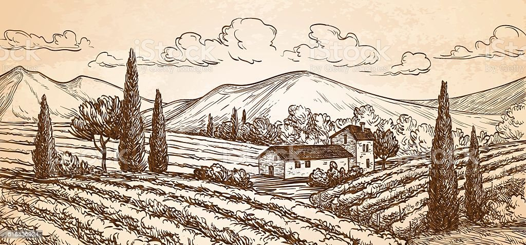 Hand drawn vineyard landscape. vector art illustration