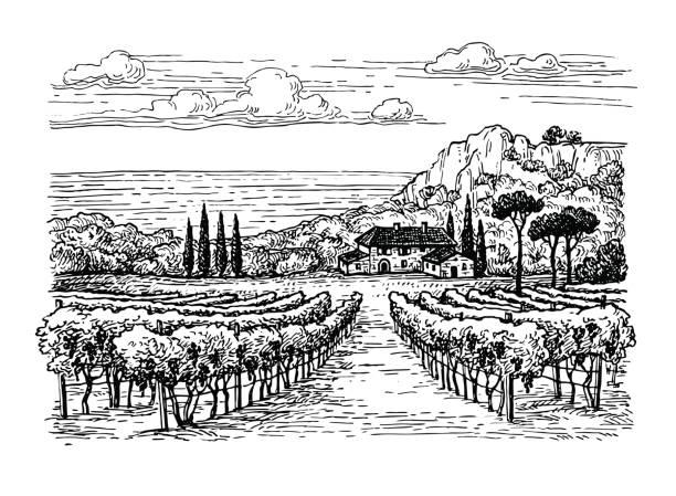 bildbanksillustrationer, clip art samt tecknat material och ikoner med hand dras vingård landskap. - vineyard