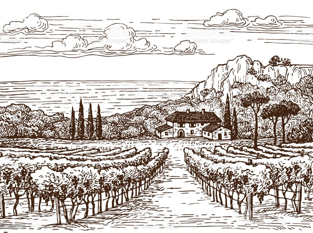 Hand drawn vineyard landscape. royalty-free hand drawn vineyard landscape stock vector art & more images of agriculture