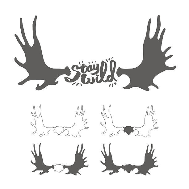 Hand drawn vintage antlers.