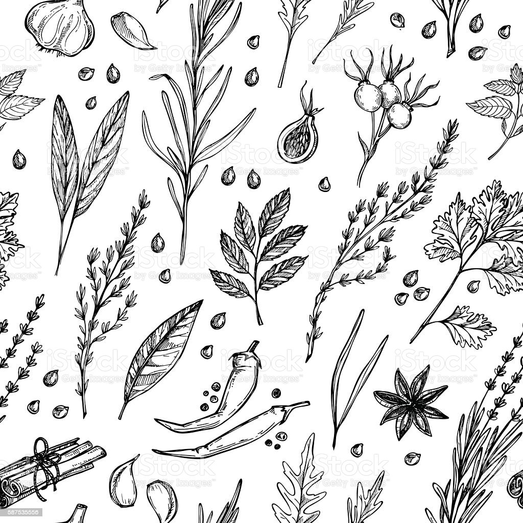 Hand drawn vintage background - herbs and spices. Vector seamless vector art illustration