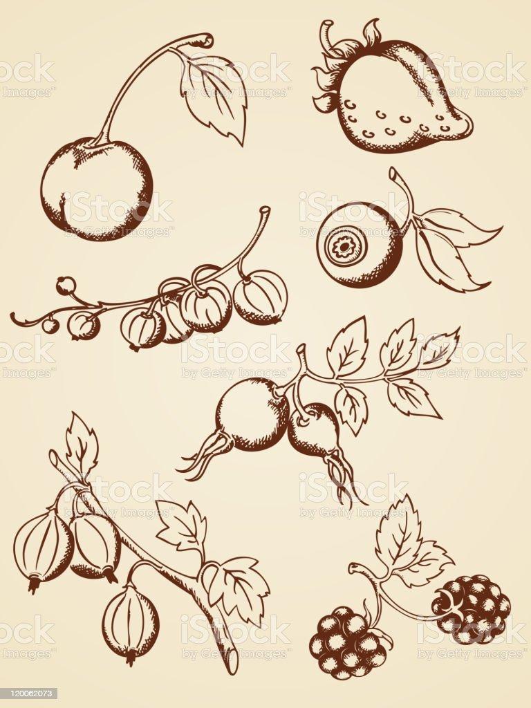 vintage dibujados a mano cerezas - ilustración de arte vectorial