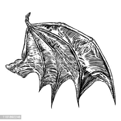 Hand drawn vintage etched woodcut fallen angel or vampire detailed wings. Dragon or gargoyle wings. Heraldic wings for tattoo and mascot design. Isolated sketch collection. Vector.