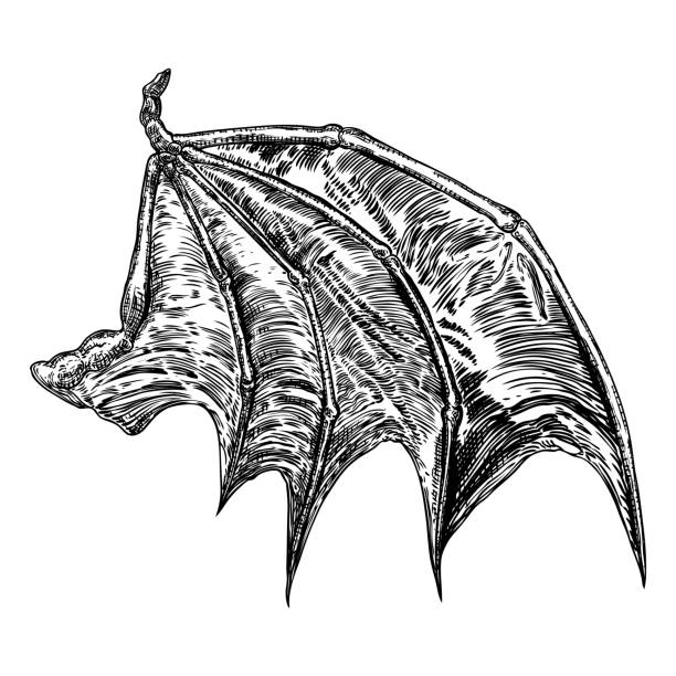 illustrazioni stock, clip art, cartoni animati e icone di tendenza di hand drawn vintage etched woodcut fallen angel or vampire detailed wings. dragon or gargoyle wings. heraldic wings for tattoo and mascot design. isolated sketch collection. vector. - gargoyle