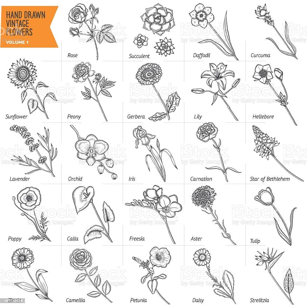 Main dessiné ensemble de fleurs vintage. illustration vectorielle. Volume 1. - Illustration vectorielle