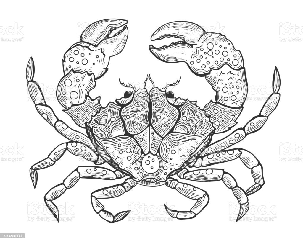 Hand Drawn Vintage Graphic Illustration With Realistic Crab Marine Creature Vintage Engraving Illustration Art Healthy Food Templates For Design Sea Shops Restaurants Markets Stock Illustration Download Image Now Istock