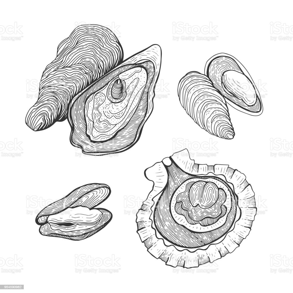Hand Drawn Vintage Graphic Illustration With Realistic Oysters And ...