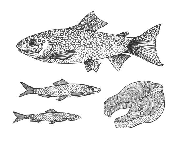 Royalty Free Rainbow Fish Drawings Clip Art Vector Images