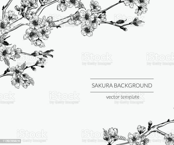 Hand drawn vintage sakura branches background botanical graphic vector id1139285628?b=1&k=6&m=1139285628&s=612x612&h=btrqkf7ga1i1xgbs163h2un8qmxrpmigaqkyivwlv 8=