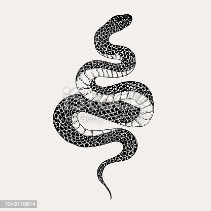 Hand drawn vintage snake illustration. Graphic sketch for posters, tattoo, clothes, t-shirt design, pins, patches, badges, stickers.
