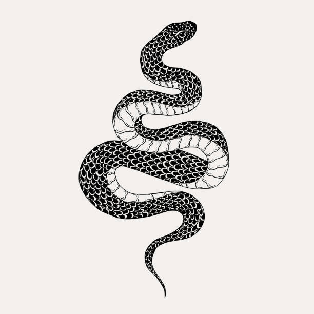 hand drawn vintage snake illustration. graphic sketch for posters, tattoo, clothes, t-shirt design, pins, patches, badges, stickers. - snakes tattoos stock illustrations, clip art, cartoons, & icons