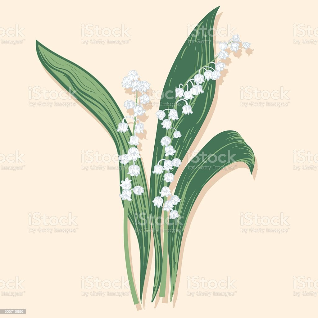 Hand drawn vintage style flowers lily of the valley stock vector art hand drawn vintage style flowers lily of the valley royalty free hand drawn vintage izmirmasajfo