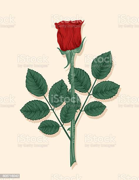 Hand drawn vintage style flowers red rose vector id505716042?b=1&k=6&m=505716042&s=612x612&h=yovocka0idq2q r39rpirsb4jjq7tweugs sorqfbna=
