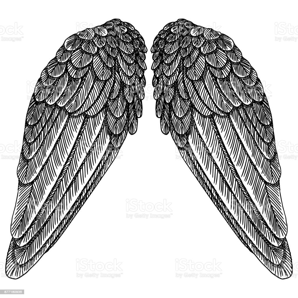 Hand drawn vintage wings pair. Etched woodcut vintage style pair of wing. Sketch vector. royalty-free hand drawn vintage wings pair etched woodcut vintage style pair of wing sketch vector stock vector art & more images of animal body part
