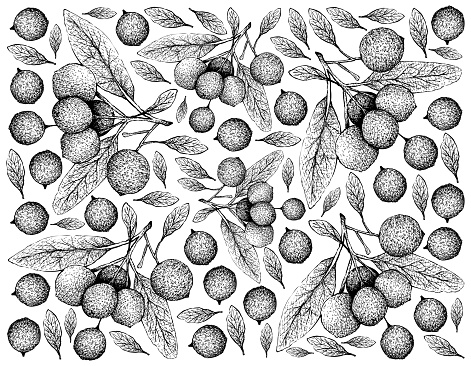Hand Drawn Wallpaper of Hanza Fruits on White Background