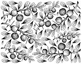 Hand Drawn Wallpaper of Kei Apple Fruits on White Background