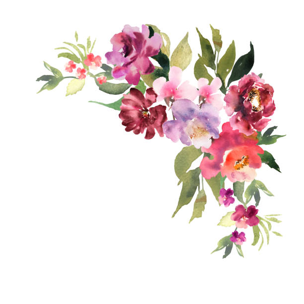 Hand drawn watercolor bouquet on white background. Beautiful gentle flowers in the composition. Roses. Design for card, invitation. Vector. Hand drawn watercolor bouquet on white background. Beautiful gentle flowers in the composition. Roses. Design for card, invitation. Vector flowerbed stock illustrations