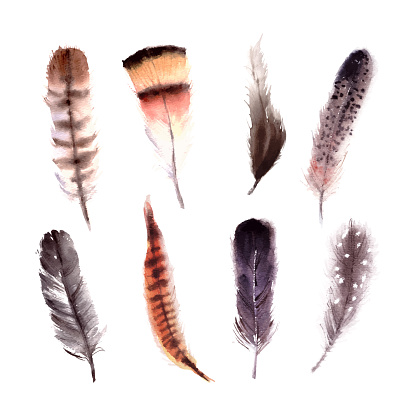 Hand drawn watercolor colorful bird feather set isolated on white
