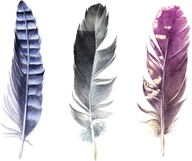 illustrazioni stock, clip art, cartoni animati e icone di tendenza di hand drawn watercolor feather set - piume colorate