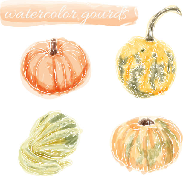 hand drawn aquarell gourds - flaschenkürbis stock-grafiken, -clipart, -cartoons und -symbole