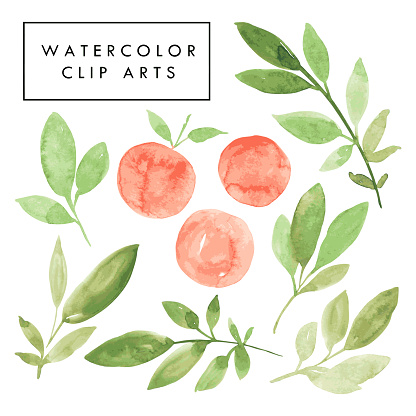 Hand drawn watercolor illustration of green branches with leaves and orange peaches.