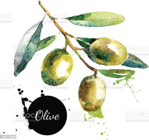 Hand drawn watercolor painting on white background vector illus vector id492123066?b=1&k=6&m=492123066&s=612x612&h=rotx1pbhqqya2ipxgtgreope7fo hmcz8vt05ubu h8=