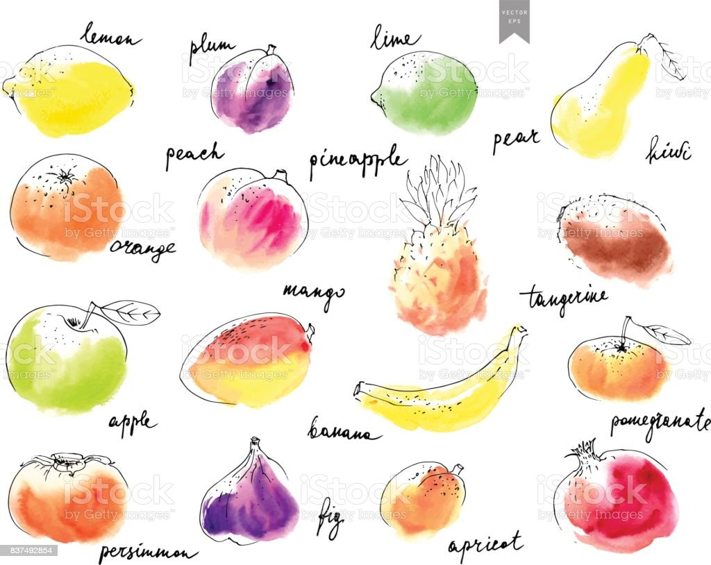 Hand drawn watercolor stains with line art fruit drawings overlaid. vector art illustration
