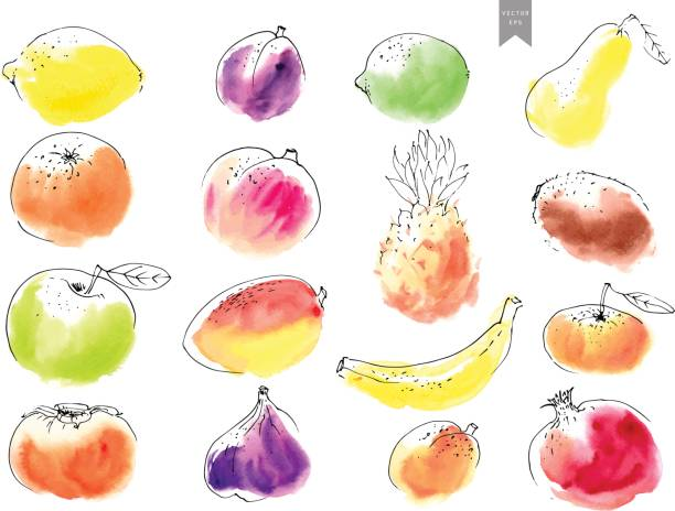 Hand drawn watercolor stains with line art fruit drawings overlayed. Hand drawn watercolor stains with line art fruit drawings overlayed. Colorful set in simple minimalistic style. banana drawings stock illustrations