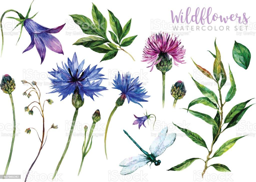 Hand drawn watercolor wildflowers vector art illustration