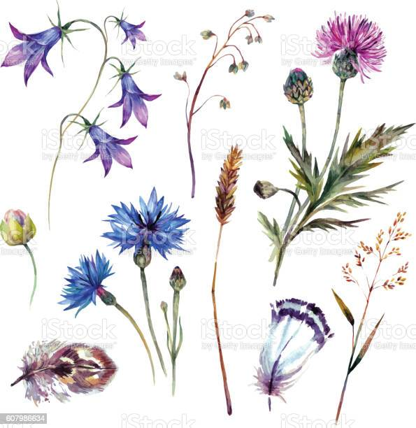 Hand drawn watercolor wildflowers vector id607986634?b=1&k=6&m=607986634&s=612x612&h=vhqwn6cycfx10 odfzmym0lo4d6o2 akyelhxfy5g 8=