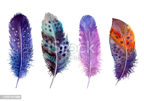 Watercolor feathers set isolated on white. Hand drawn watercolour bird feather vibrant boho style bright illustration. Print design for t-shirts, invitation, wedding card.