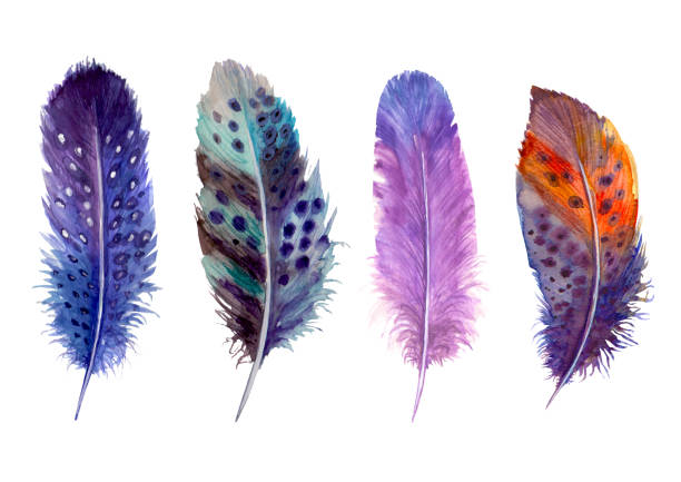 illustrazioni stock, clip art, cartoni animati e icone di tendenza di hand drawn watercolour bird feathers vibrant boho style bright illustration. - piume colorate