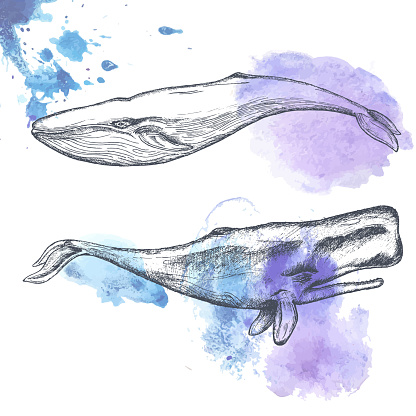Hand drawn whales.
