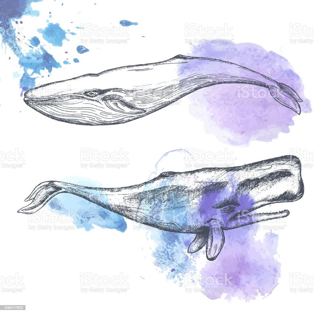 Dessiné à la main des baleines. - Illustration vectorielle