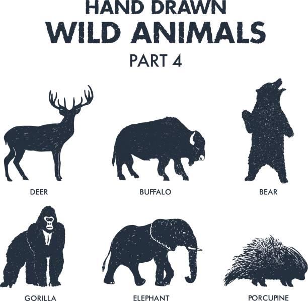 Hand drawn wild animals icons set. vector art illustration