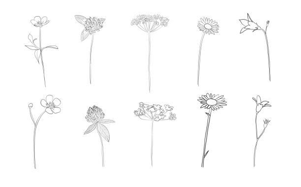 bildbanksillustrationer, clip art samt tecknat material och ikoner med hand dras vilda blommor i sommar - summer sweden