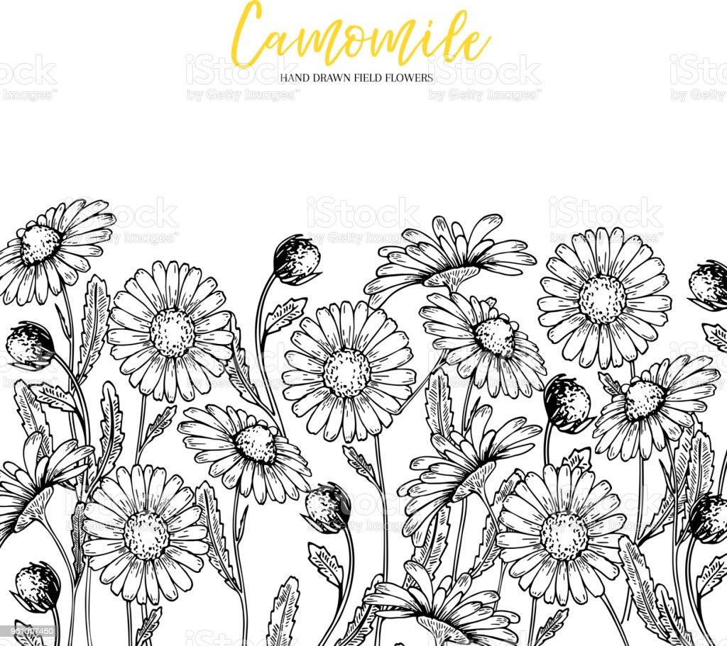 Hand Drawn Wild Hay Flowers Chamomile Daisy Flower Medical Herb
