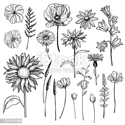 Hand drawn wild herbs and flowers. Vector sketch illustration