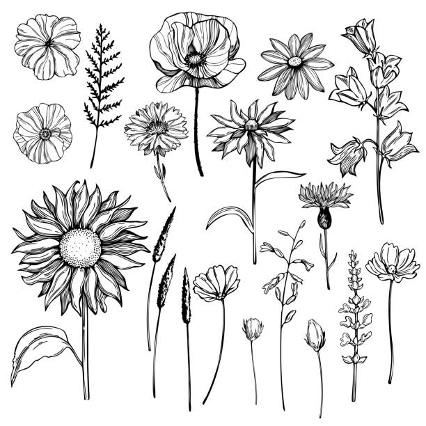 Hand drawn wild herbs and flowers. Vector sketch illustration Hand drawn wild herbs and flowers. Vector sketch illustration flower head stock illustrations