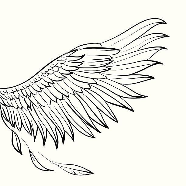 Hand drawn wing Vector bird hand drawn wing, sketchy illustration bristle animal part stock illustrations
