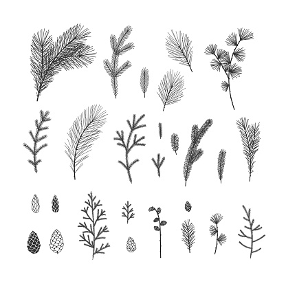 Hand drawn winter floral illustrations collection on white background
