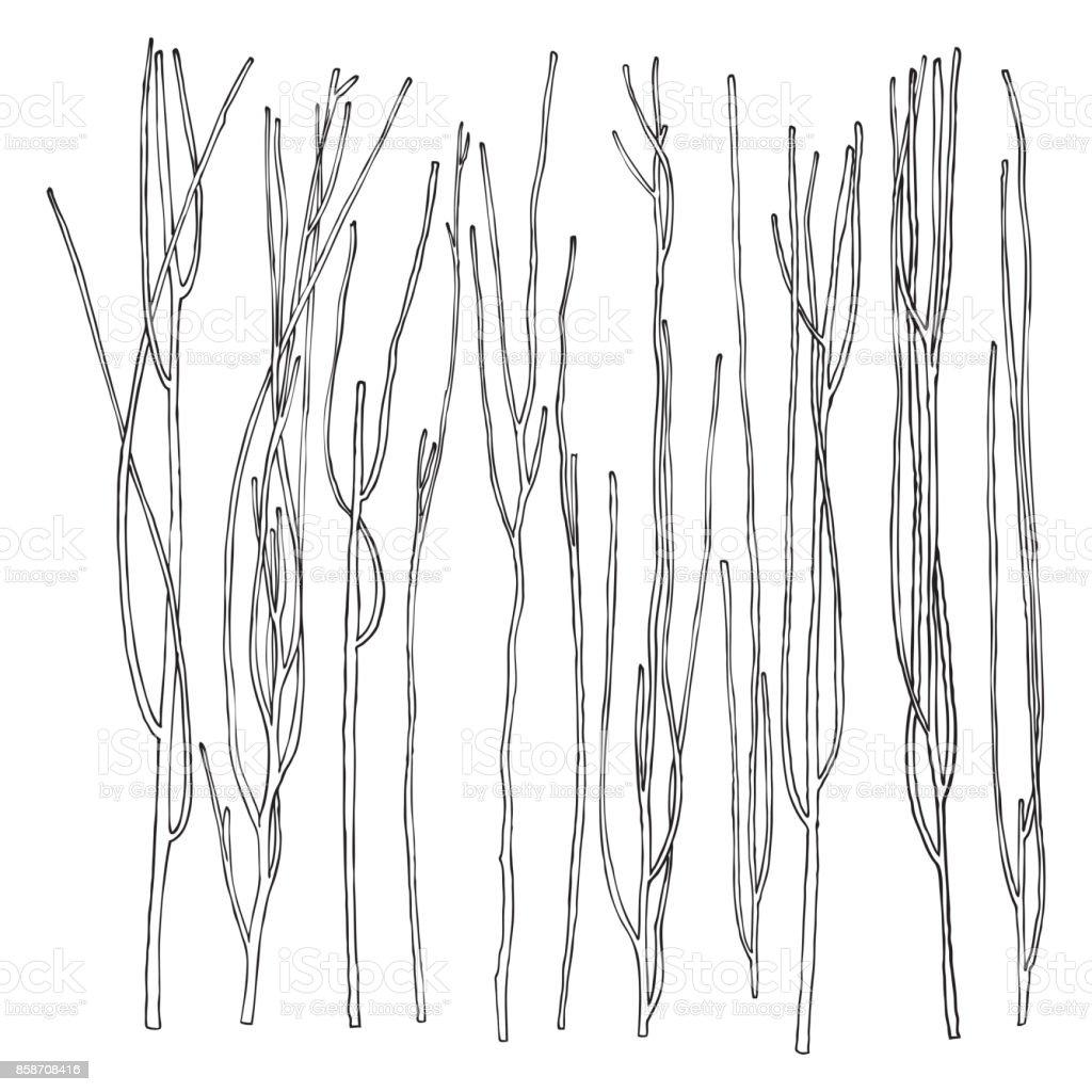 Die Hand Gezeichnete Holz Zweig Set Tinte Elemente Designkollektion ...
