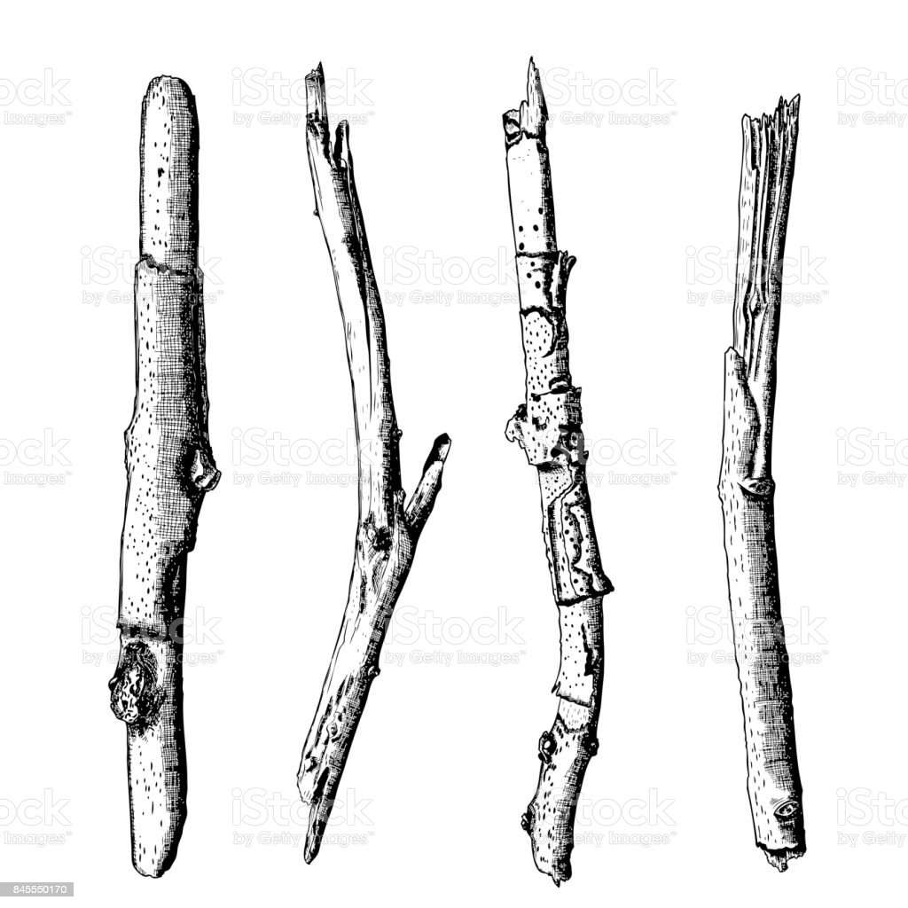 Hand drawn wood twig set,  ink rustic design elements collection. Dry wood tree branch and wooden twig bundle. Detailed and precise ink drawing driftwood twigs set in engraved style. Vector. vector art illustration