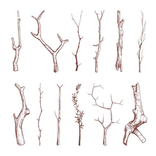 ręcznie rysowane gałązki drewniane, drewniane patyki, gałęzie drzew wektorowe rustykalne elementy dekoracyjne - gałązka stock illustrations
