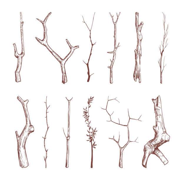 hand drawn wood twigs, wooden sticks, tree branches vector rustic decoration elements - gałązka stock illustrations