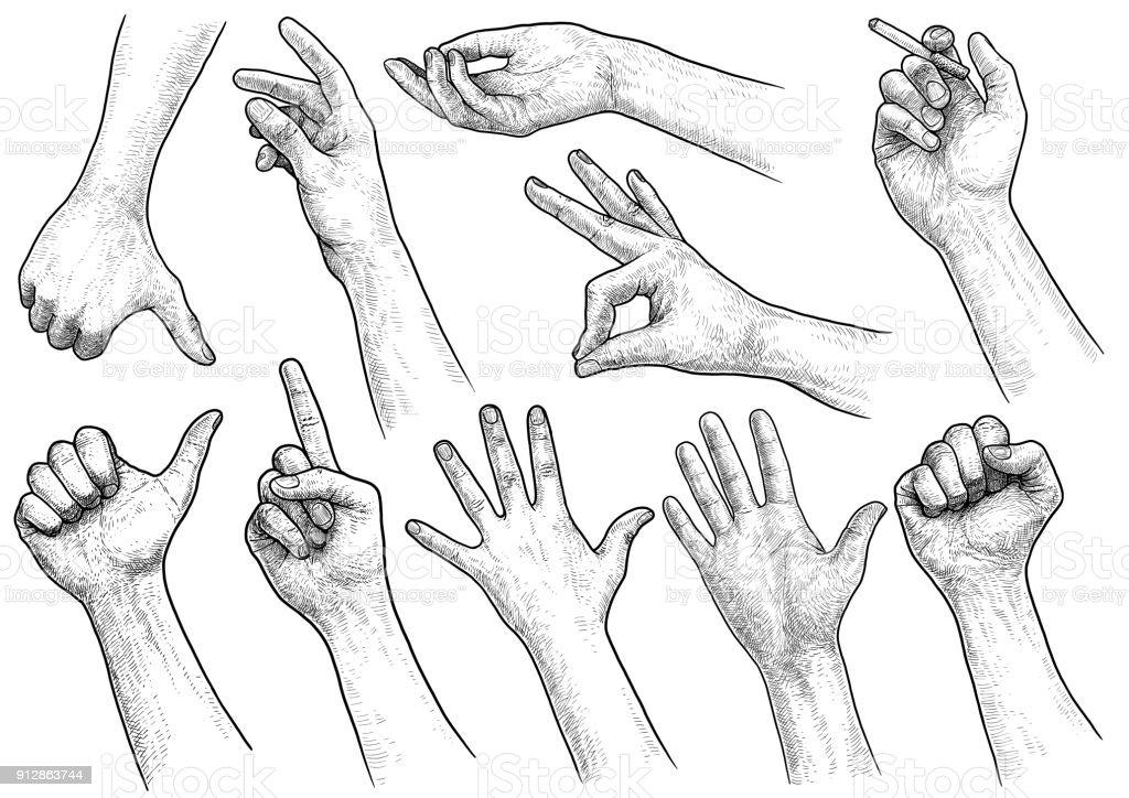 Hand gesture collection illustration, drawing, engraving, ink, line art, vector vector art illustration