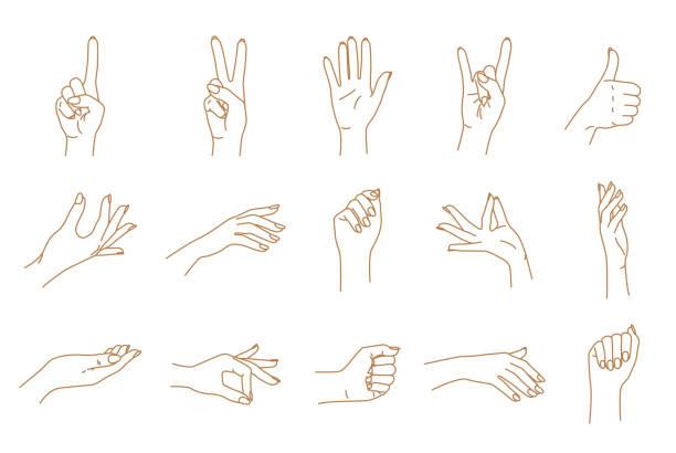 手のジェスチャー輪郭ベクトルを設定 - 手 女性点のイラスト素材/クリップアート素材/マンガ素材/アイコン素材