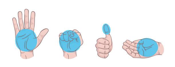 stockillustraties, clipart, cartoons en iconen met hand gebaren set geïsoleerd. palm, vuist, duim omhoog, gecupt hand. delen van voedsel. infographic. moderne, mooie stijl. realistische. platte stijl vector illustratie. tekens en pictogrammen. verschillende posities. - portie