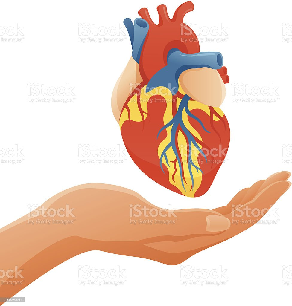 Hand Holding Anatomic Heart vector art illustration