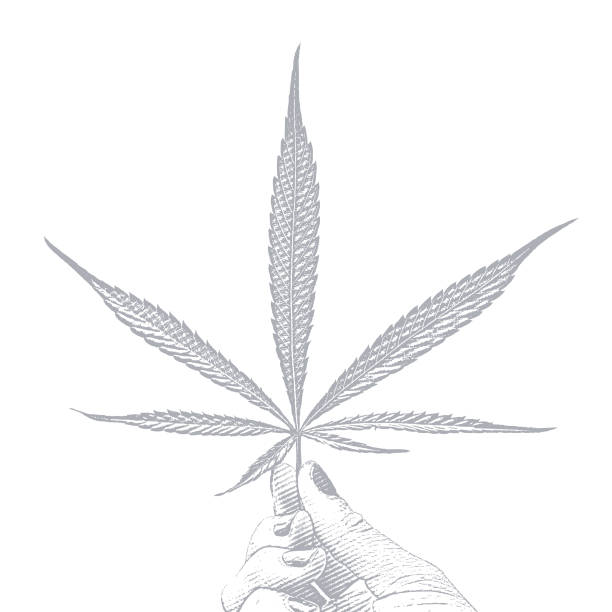 Hand holding cannabis leaf on white background vector art illustration